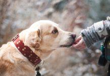 Convivenza tra il bambino e l'animale domestico