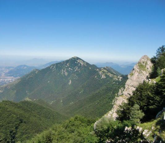 flora nei Monti Picentini