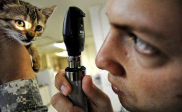 veterinario per il tuo gatto