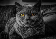 errori più comuni commessi dai proprietari di gatti