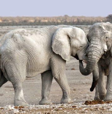 visitare namibia windhoek