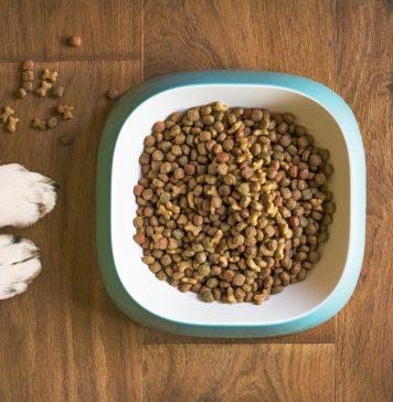 leggere le etichette delle crocchette per cani